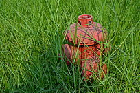 绿草中的消防栓