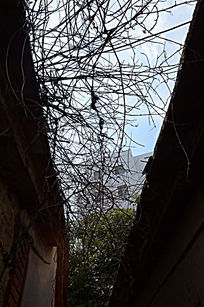 树枝与古建筑
