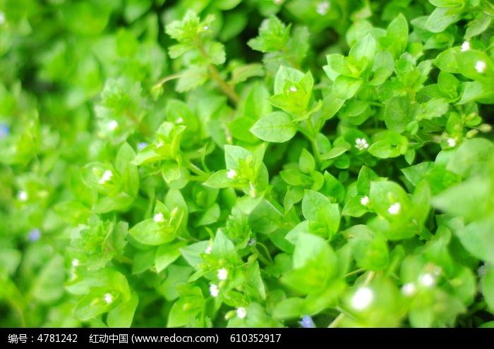 绿色叶子背景素材图片