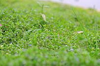 绿色叶子蓝色小花背景素材