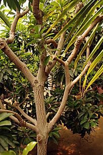 热带树干纹路