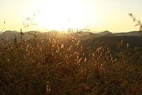 晨光照耀的草丛植被