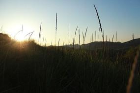 太阳升起时的青草丛