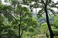 太行山森林植被