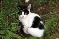 草丛里的小猫