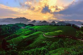 贡茶之乡美景