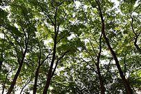 公园严实的树林植被