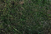 绿草背景素材
