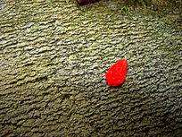 绿石头地上的红色花瓣