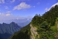 山峰上的树林植被