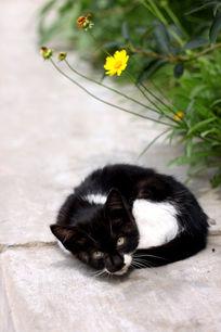 蜷缩的小猫