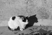 阳光的的小猫