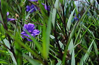 紫色大花朵特写