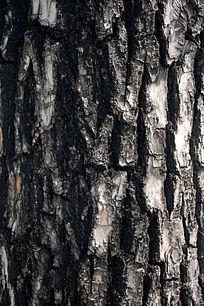 树干表面肌理