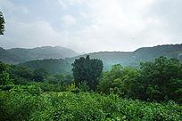 丰富的泰山森林植被风光