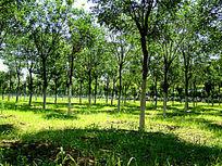 绿油油的树林