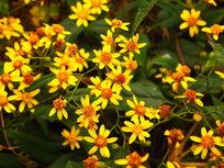 漂亮的黄色小花