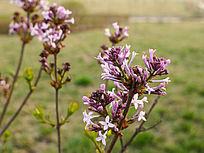 紫色小花沐浴阳光