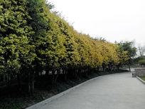 风景图背景图绿色植物素材背景环保素材