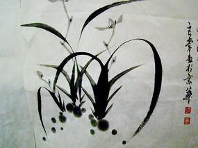 水墨画植物