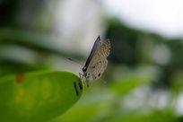 可爱的蝴蝶