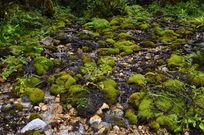 绿油油的青苔点缀在山坡