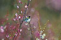 梅枝上的鸟