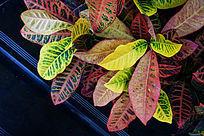 色彩叶子纹理