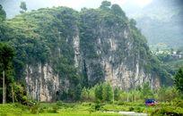 石崖的树林