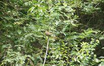 树枝上的一只小鸟