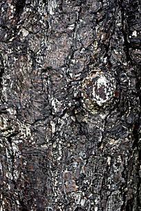 油松树皮纹理