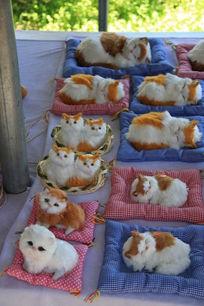 卧在毯子上的卡通猫咪