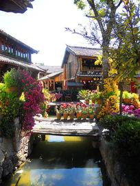 鲜花盛开的丽江