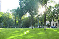 阳光下油绿得到草地