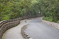 青岛中山公园的路