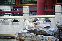 石头上的猫