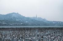 安静的西湖雪景
