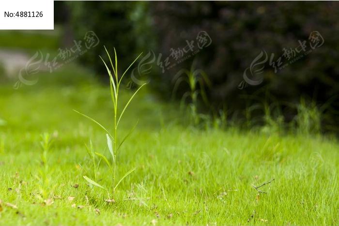 草地上的小草图片