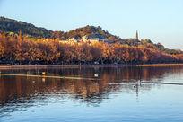 杭州西湖北山路的秋色