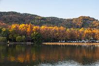 杭州西湖北山路秋色