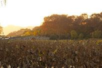 杭州西湖秋天的黄昏