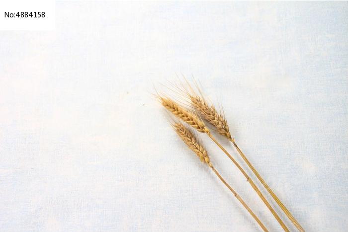 黄色麦穗背景图片