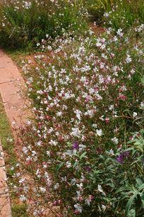 遍布植物园的白粉色小花朵