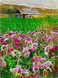 电脑抽象画《农家菜园》
