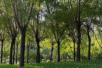 公园绿色植被