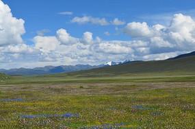 远眺雪山和草原