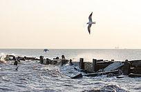 迎着海浪逆风飞行的海鸥