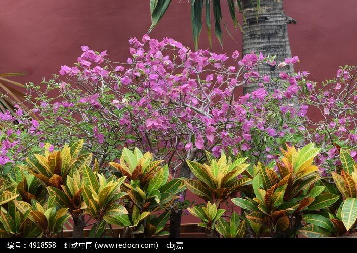 紫色花朵和黄绿色叶子图片