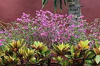 紫色花朵和黄绿色叶子