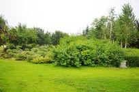 长春园绿草地